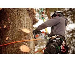 Спилим дерево любой сложности
